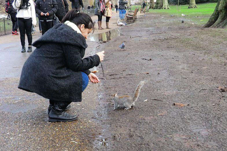 Лондон, Сейнт-Джеймс парк - белочка пришла!