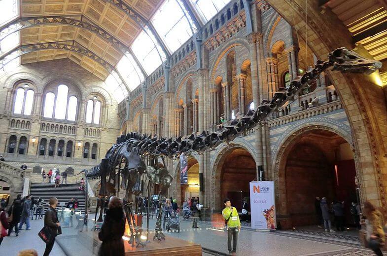 Лондон, Музей Естественной истории