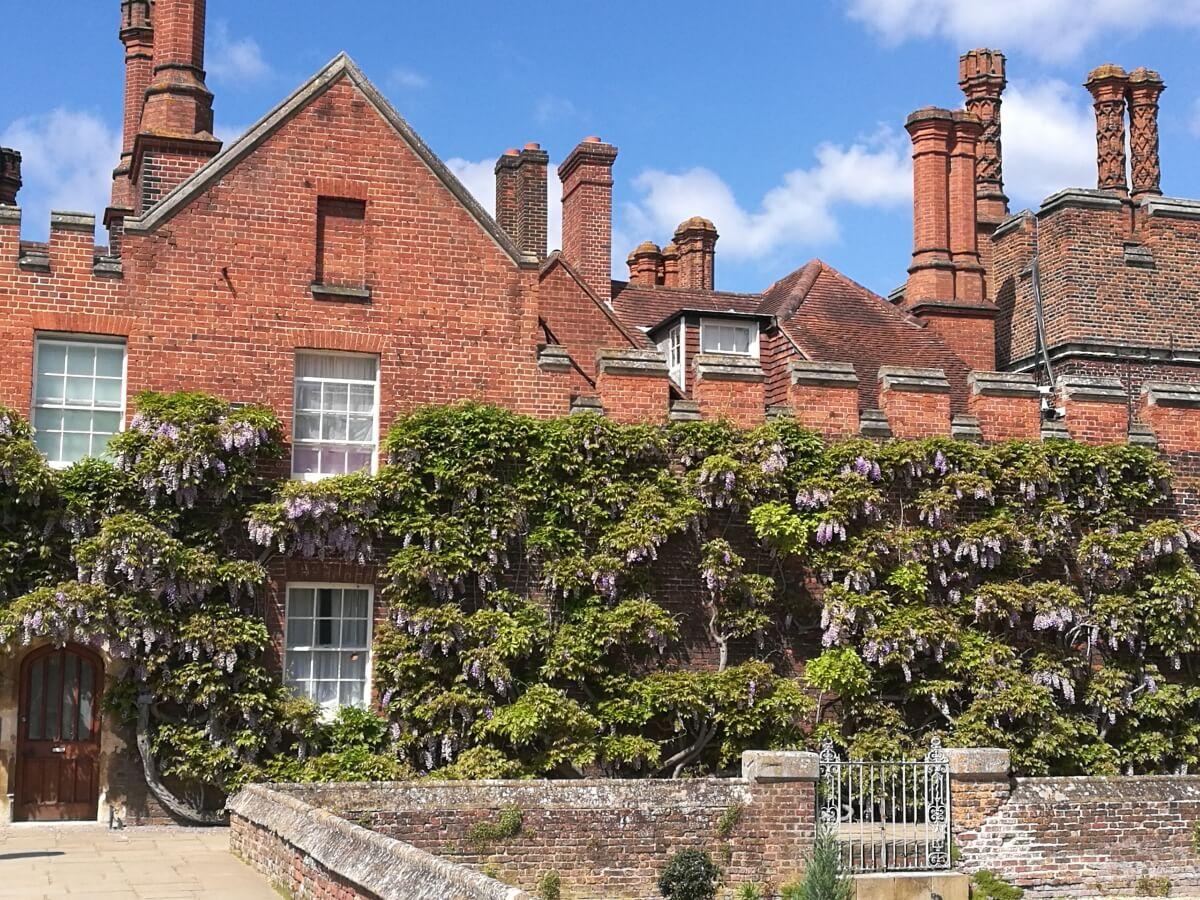 Хэмптон Корт - часть старого дворца с глицинией